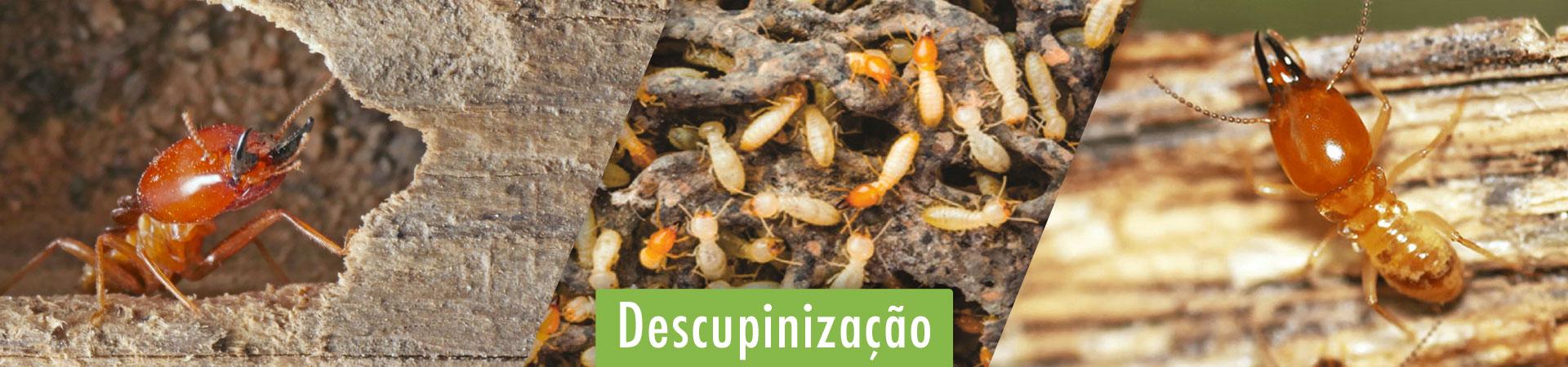 descupinizacao-em-braganca-paulista-sp