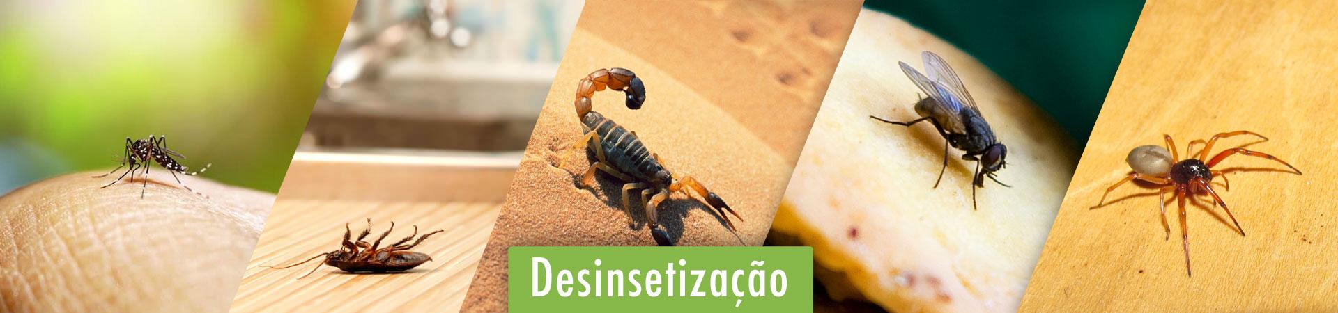 desinsetizacao-em-braganca-paulista-sp