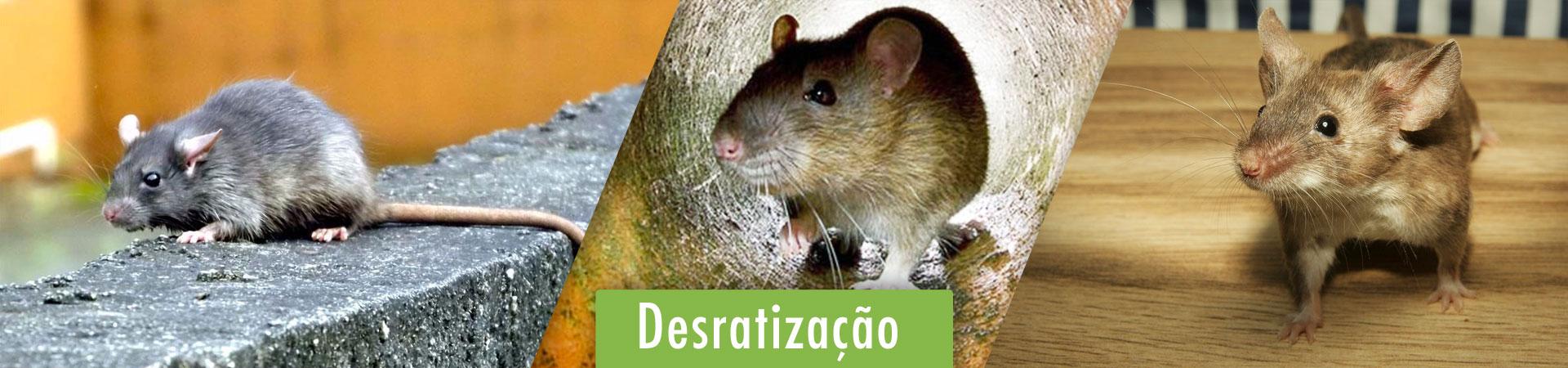desratizacao-em-braganca-paulista-sp